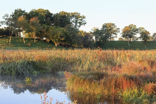 Wetlands Violations in Chesapeake Bay Watershed