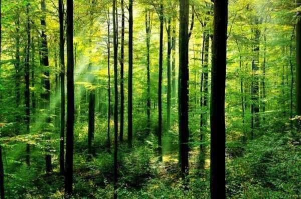 $1 Million in Urban Forestry Grants for New York